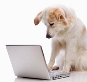 Pet Sitting Client reviews testimonials recommendations