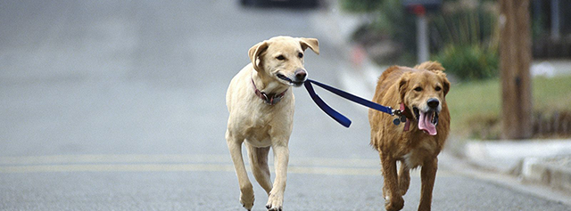 Dog Walking job